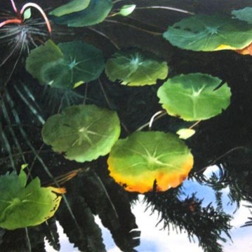 12. Lily Pads, Watercolor, 30x22 SOLD