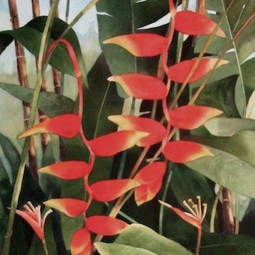 5. Heliconia, Watercolor, 30x22 $2100