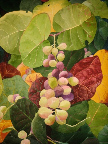 6. Sea Grapes, Watercolor, 30x22 $2100